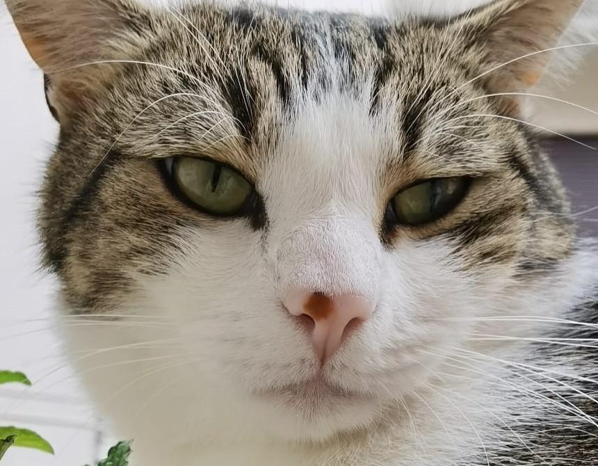 """Smarrito un gatto. La proprietaria: """"aiutatemi a ritrovarlo"""""""
